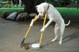 20080809170822-perro-limpia-caca.jpg